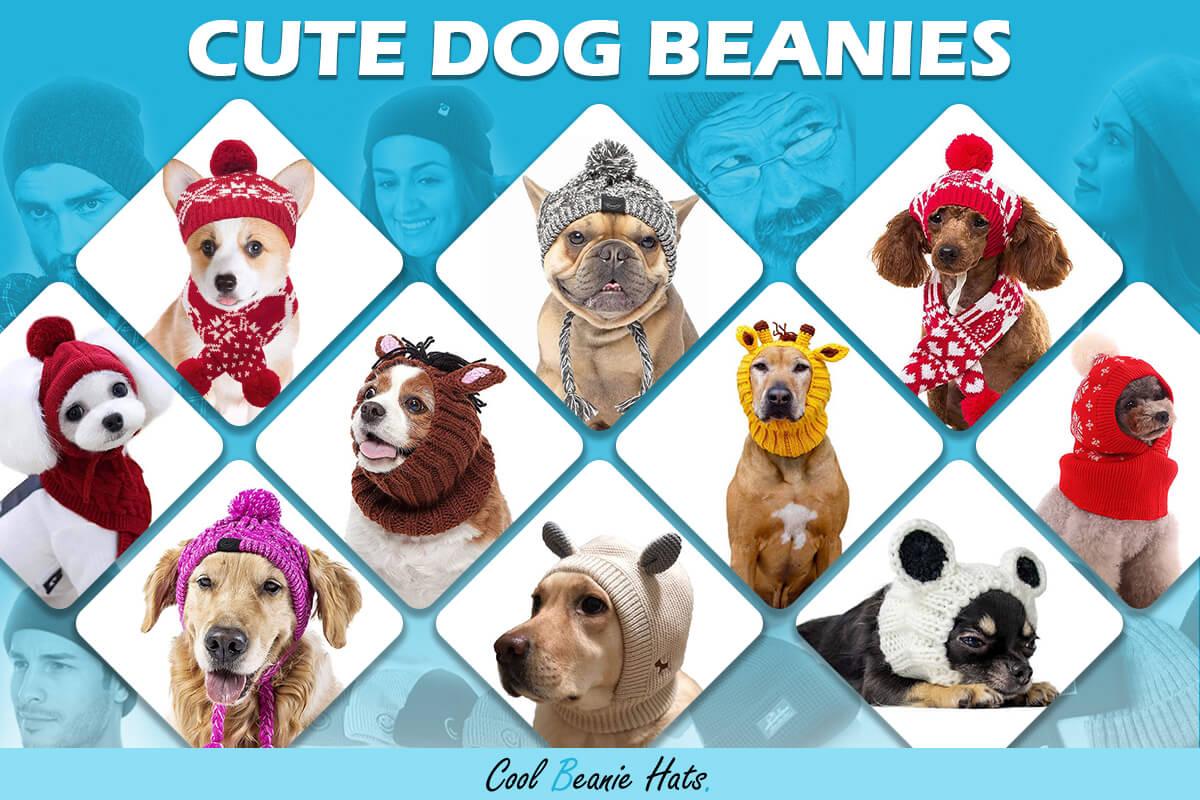 best dog beanies